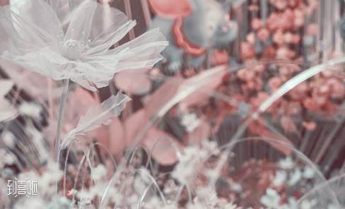 2021属猪三月结婚日子有哪几天比较好?  第3张